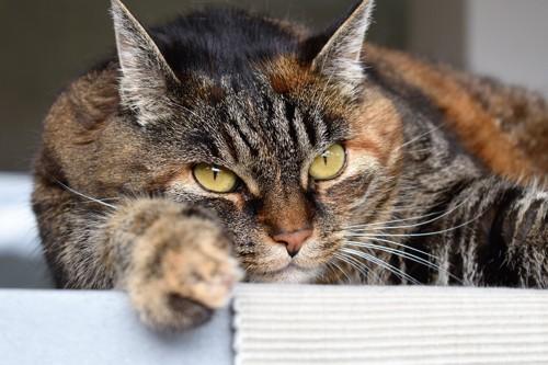 静電気を帯びた猫