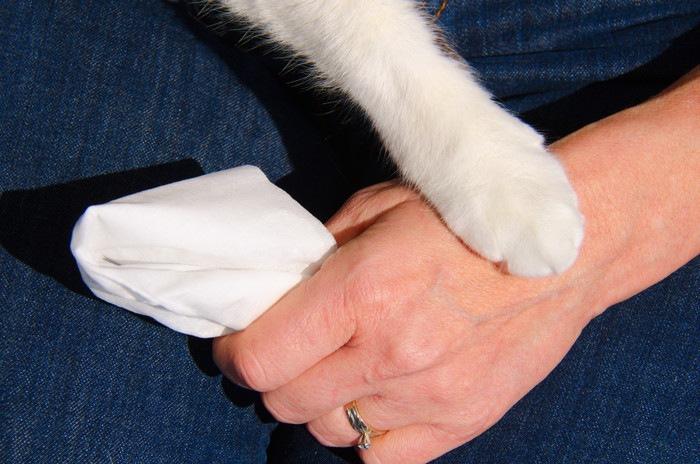 ティッシュを持つ人の手を抑える猫の手