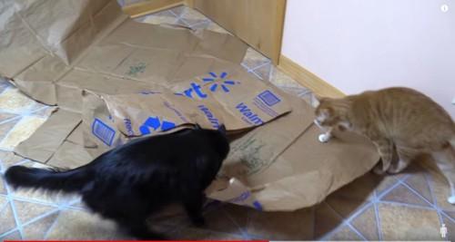 紙の上のキャットニップに近寄る2匹の猫