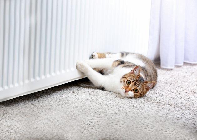 暖房器具の前で寝転がっている猫