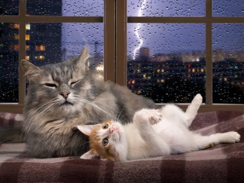 嵐の夜にくつろいでいる猫2匹