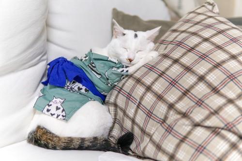 ちゃんちゃんこを着る猫