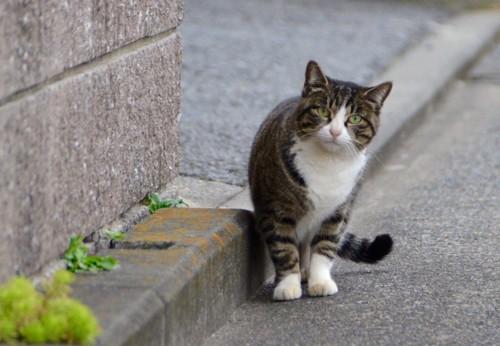 道路の端を歩く猫