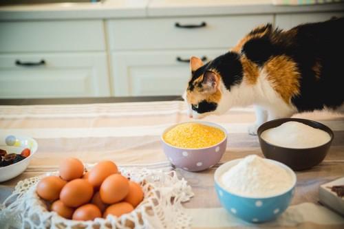 小麦粉と卵が置かれたテーブルを歩く猫