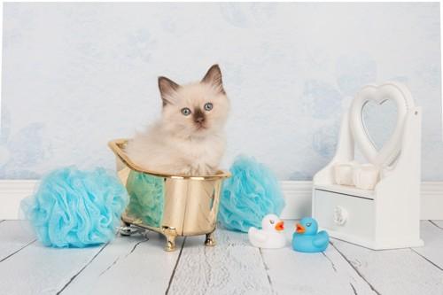 おもちゃのお風呂と子猫