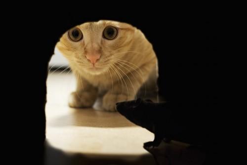 トンネルの中を覗く猫
