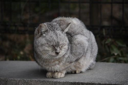 うずくまって眠る猫