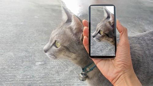 GPS首輪をはめた猫とGPSを読み取るスマホ