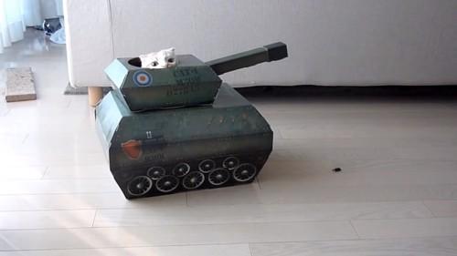 おもちゃの戦車から顔を出してカメラの方を見る猫