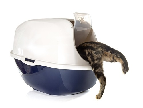 トイレに入っていく猫