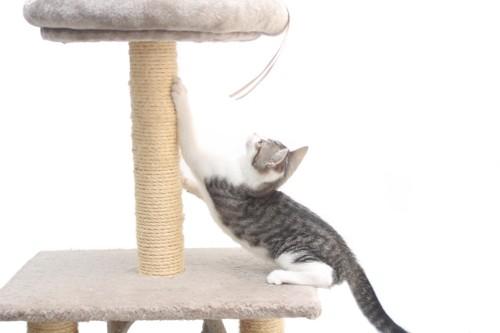キャットタワーで爪研ぎをする子猫