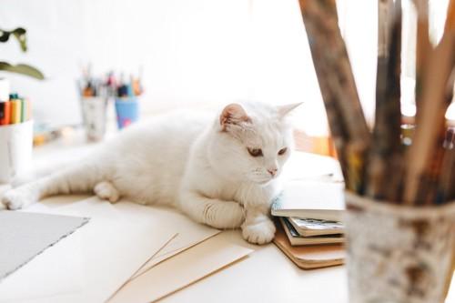 机の上に乗っている猫