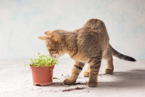 葉っぱが気になる猫