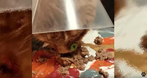 餌を食べる猫