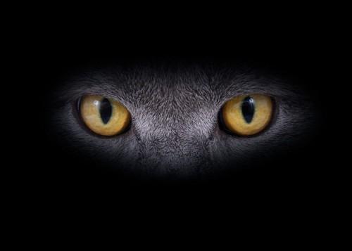 暗がりの猫
