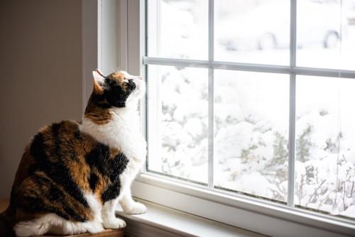 雪が降る窓の外を見つめる猫