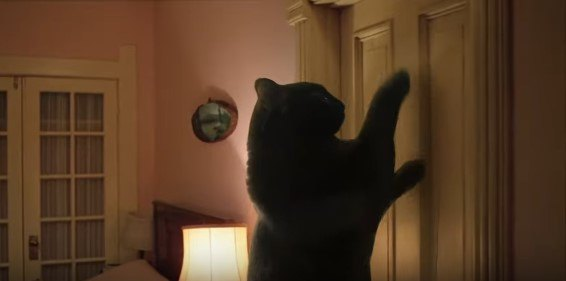 ドアをひっかくアウルキティ