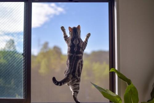 網戸にはりつく猫