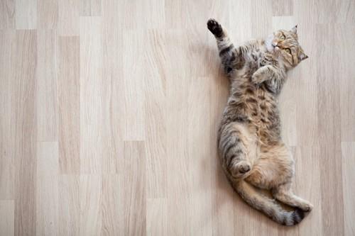 床に横たわる猫