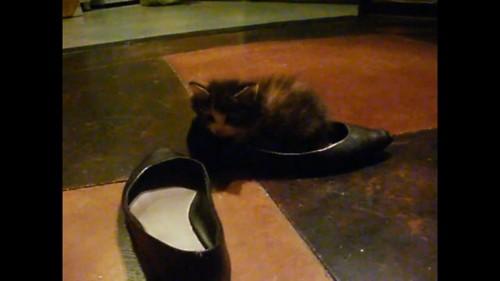 靴の中に座る