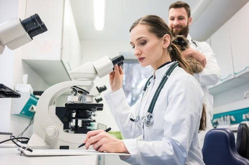 顕微鏡で検査する獣医師