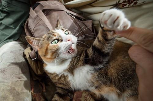 人の指に手を出す猫