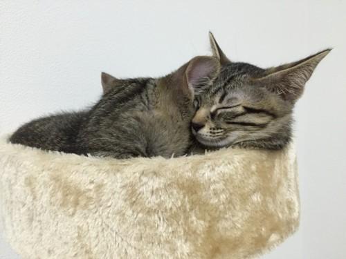 キャットタワーで眠るふたり