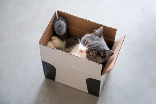 狭い箱に収まっている猫