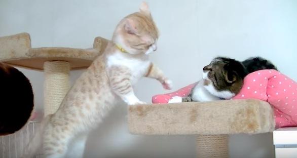 白と黒2匹の猫
