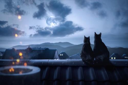 屋根の上で月を見る二匹の猫の後ろ姿