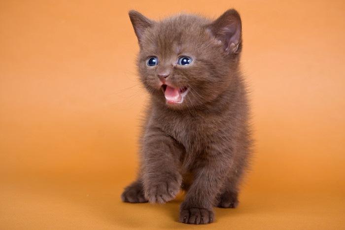 いたずら好きそうな猫