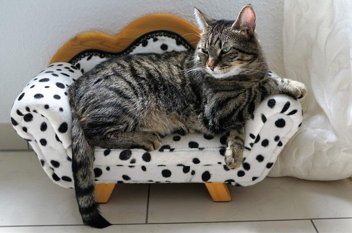 ソファに座るトイガー