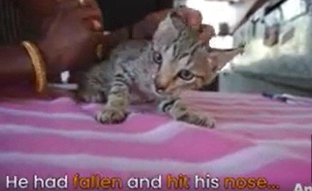 治療を受ける子猫