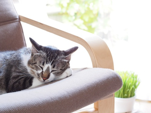 イスの上で寝る猫