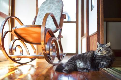 籐椅子の横にいる猫