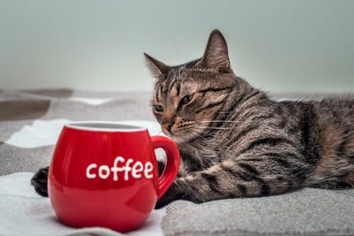 赤いカップの横で寛ぐ猫