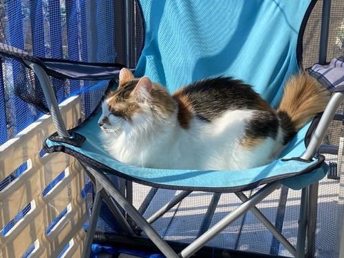 外で穏やかにしている猫