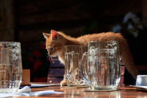 コップの間を歩く子猫