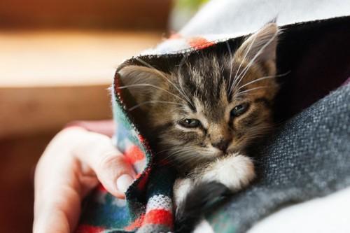 包まれる猫
