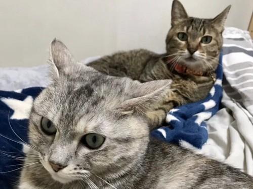 毛布の上に猫2匹