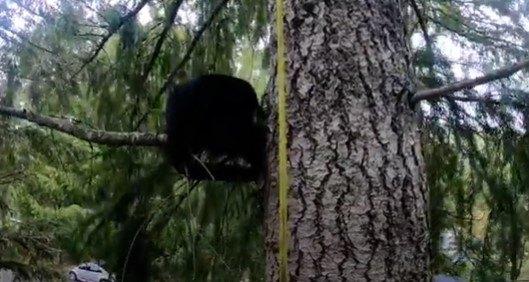 立ち往生する2匹目の猫
