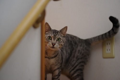 階段の影からこちらを見る猫