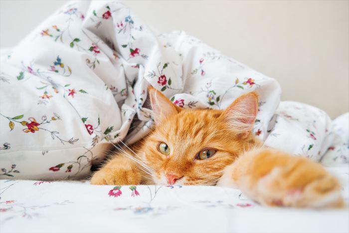 ふとんにくるまって寝ている猫