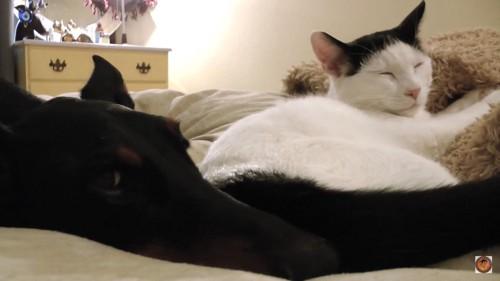 2匹仲良く寝る