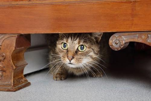 家具の下に入る怯えた猫