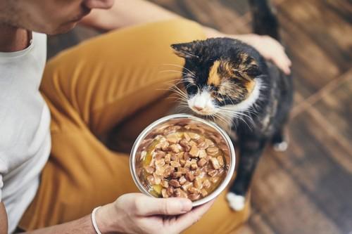 飼い主の持つ食事に顔を近づける猫