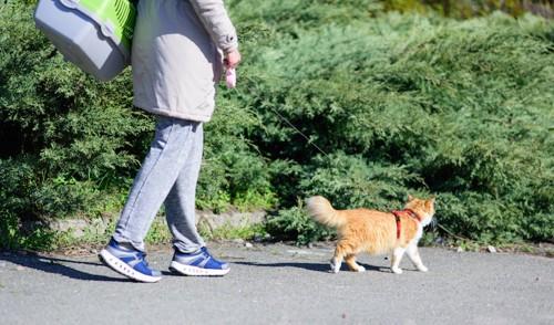 ハーネスをつけて飼い主と楽しく散歩をする猫