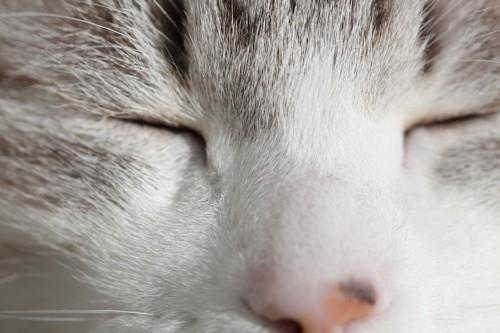 目を閉じた猫の顔アップ