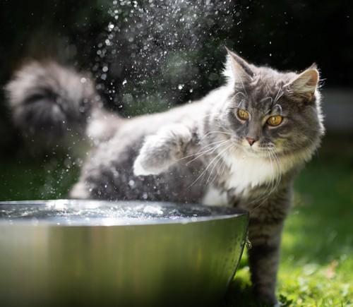 水遊びをする猫