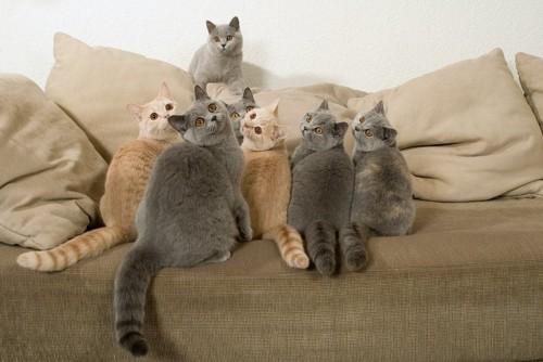 ソファーに乗って同じ方向を見る猫たち